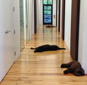 There is such a thing as lying down on the job for the dogs of Boulton Creative. President Beth Boulton says when she was looking for a new office space, one consideration was outdoor space for dogs. The company built its office at Spring and Smith streets in Greensboro complete with an outdoor dog run.