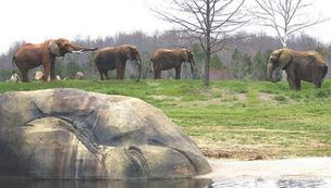 The North Carolina Zoo says 2012 brought its highest attendance record in 15 years