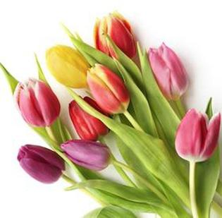 Oberer's Flowers will open its second Dayton-area location at 9705 Dayton-Lebanon Pike in mid-April.