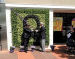 Cameron Village unveils 'living wall'