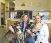 Lancet Software Development Inc. is a pet-friendly office. From left: Serena Myers and Cindy Alewine with their dogs.