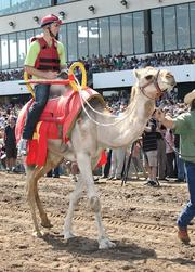 Tabke participated in Extreme race Day at Canterbury Park in July 2012. Tabke's animal won the four-camel exhibition.