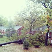 Washington: More than 100,000 homes in Arlington County were without power after  Hurricane Sandy rolled over the Washington region. Many power outages  were caused by downed trees.