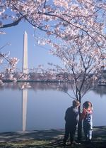 Sage Communications gets Cherry Blossom job