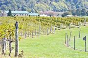 Breaux Vineyards has 105 acres planted, which is up from 3 acres when it opened in 1997.