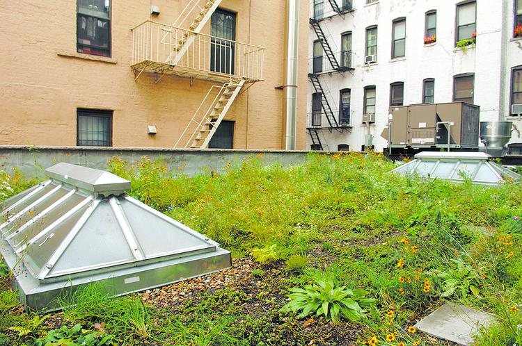 A green roof in New York.