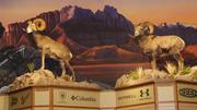 Wildlife dioramas like this are located throughout the store. This one is above the shoe section.