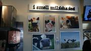 Mooyah prides itself on its myriad shakes and its fun environment, as depicted by these discerning cows' noses.