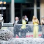 Zoo Ball draws VIP crowd to check out animals, raise money: Slideshow