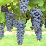 Wisconsin's wineries, large and small, pouring it on: The List