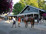 Saratoga auction will gauge strength of New York thoroughbred market