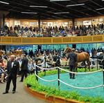 New York-bred horse sales look to build off last year's strong showing