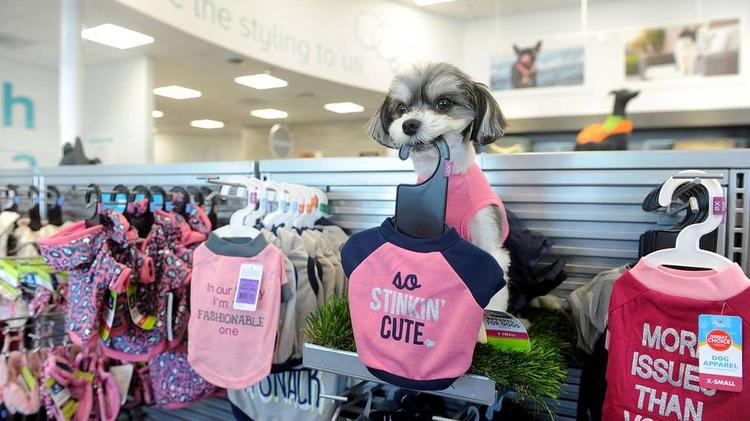 Petsmart testing new pet spa concept phoenix business journal petsmarts new test concept in new york offers high end products for pets solutioingenieria Gallery