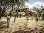 South Texas exotic game breeders step up to save giraffe as population dwindles in Africa (slideshow)