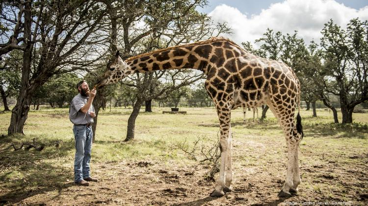 South Texas exotic game breeders step up to save giraffe as