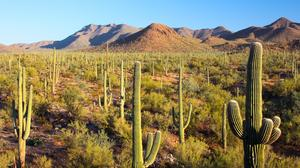 Amazon turns down 21-foot cactus from Arizona group seeking second headquarters