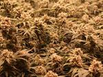 Arizona Supreme Court rejects recreational marijuana challenge, clearing its path to the ballot