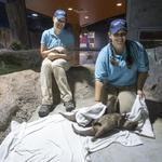 OdySea Aquarium opening this weekend