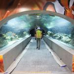 OdySea planning $50M bird aviary, Ferris wheel, hotel to create full-fledged theme park