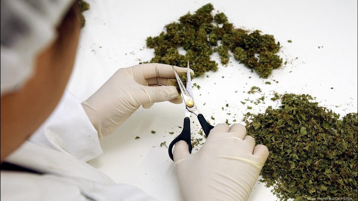 Maryland medical marijuana growers, processors form trade association