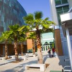 USF contributes to Florida's top higher education ranking