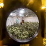 Recreational marijuana goes up in smoke in Arizona