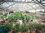 First US cannabis pharmaceutical lab launches in NM, says Ultra Health