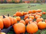 From 9News, 9 things to do this weekend: Pumpkins, corn maze, Fright Fest and more