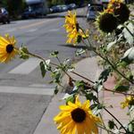DBJ & 9News 9Neighborhoods: Denver's Sunnyside offers quaint charm (Photos)