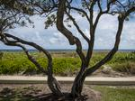 NEIGHBORHOOD TOUR: Downtown Delray Beach attracts shoppers, developers