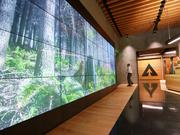 A giant digital mural displaying a photo of a forest taken by an employee and hugs wooden timbers in the ceiling, floor and walls, greets visitors entering Weyerhauser Corp.'s new offices at Occidental Square in  the Pioneer Square neighborhood of Seattle, Wash. on  Oct. 10, 2016.
