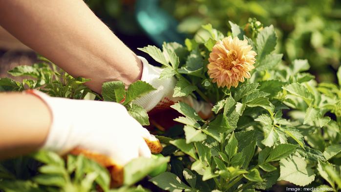 Seeking professional help (for your garden)