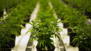 Medical marijuana will head into final negotiations without public comment