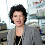 <strong>Susan</strong> <strong>Molineaux</strong> uses unique skillset to guide Calithera Biosciences