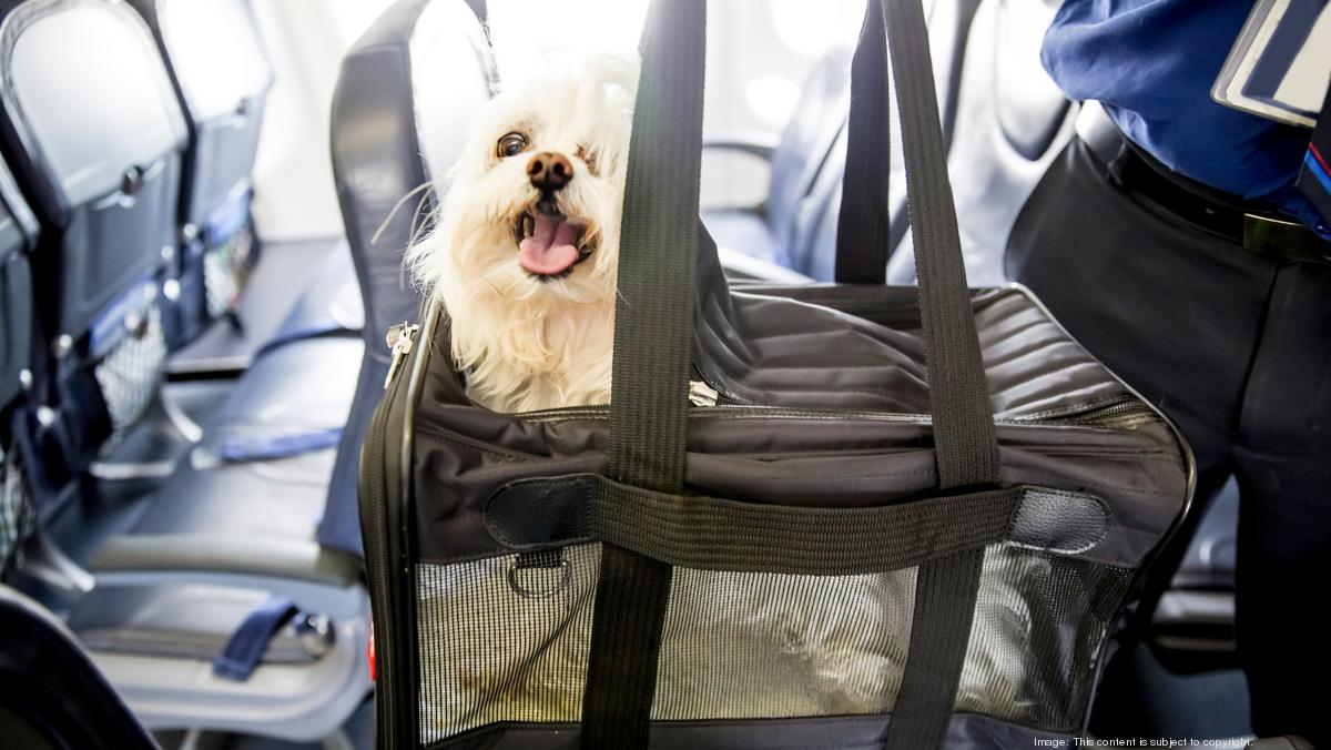 Pets on a plane: Why animals are dying aboard U S  airlines