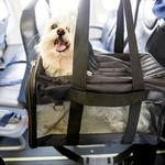 Pets on a plane: Why animals are dying aboard U.S. airlines