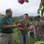 Central Oahu ag project bearing fruit
