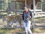 Inside the North Florida nonprofit giving life to senior tigers