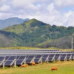 Kauai utility names candidates to fill its open board seats