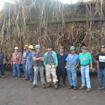Cattle could replace sugar on Maui