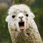 The craziest business expenses of 2016 — and that includes renting a llama
