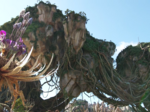 Disney Imagineers give another sneak peek at Avatar land plant life