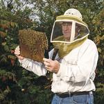 Inside St. Louis' $4.25 million honeybee research industry