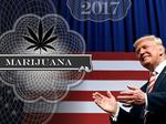 Trump is wild card on marijuana laws as Florida, other states legalize