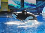 Report: SeaWorld under criminal investigation over 'Blackfish' comment