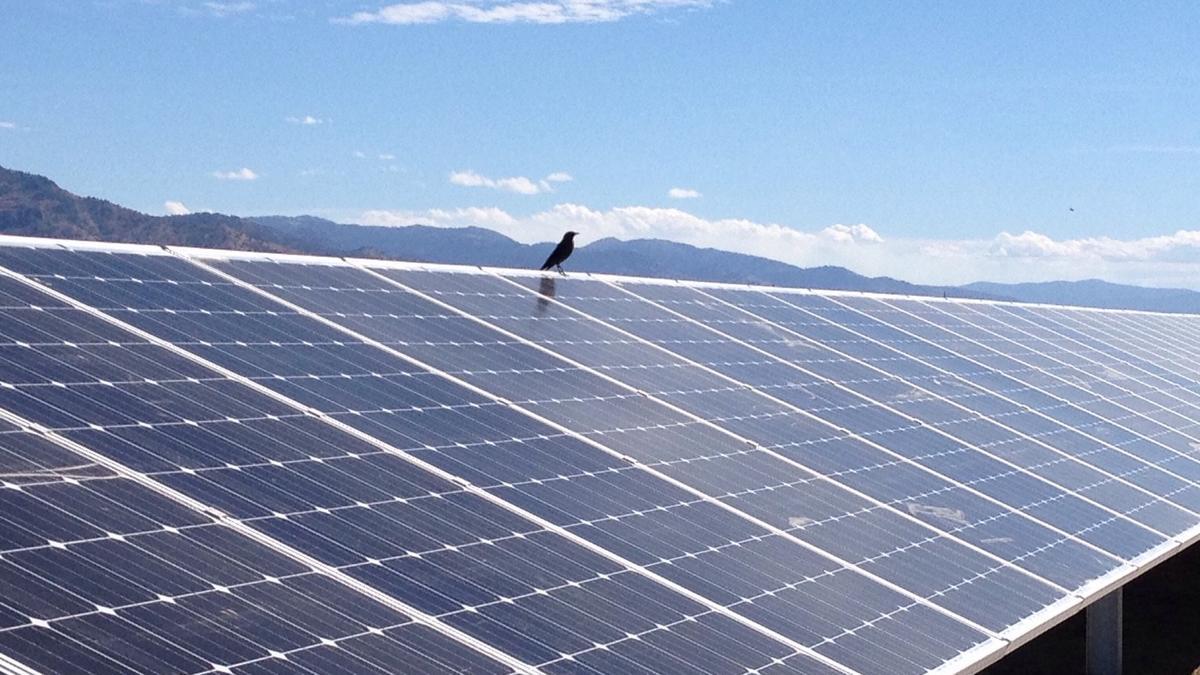 Oregon 39 S Utility Scale Solar Power Subsidy Brings Flood Of