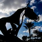 Wellington becomes epicenter of equestrian lifestyle (Photos)