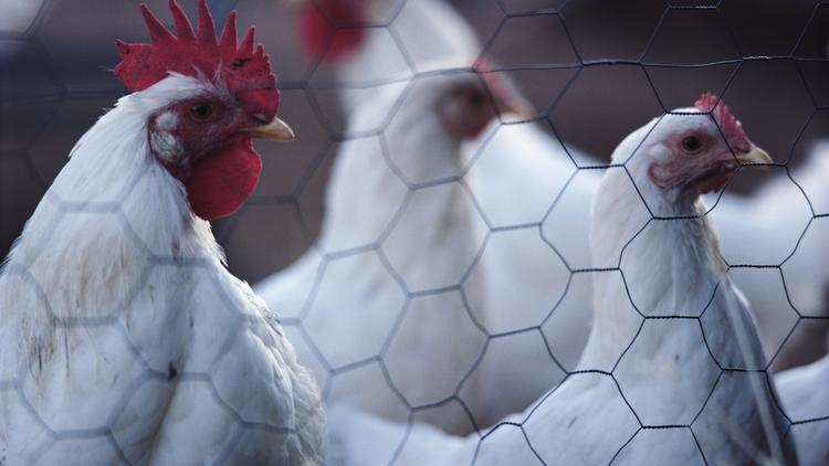 Catawba Biogas gets NC approval for poultry-waste plant's