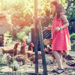 'My Connected Coop' is bringing the Internet of Things to chickens