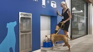The office has dog-friendly water fountains.